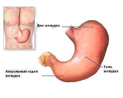 Анатомия желудка до операции - Лапароскопическая модифицированная антирефлюксная гастропластика